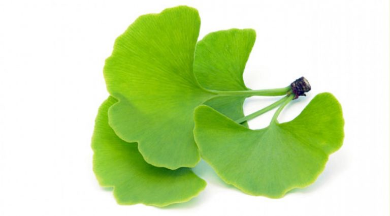 GINKGO BILOBA Reviews – Benefits and SHOCKING Side Effects